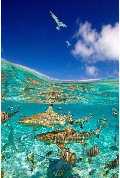 BermudaBermuda 6669 Ayarlanabilir Yüzücü Gözlüğü