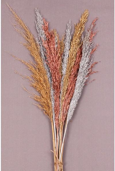 Troya Kuru Çiçek Pampas 10 Adet 100 cm Boy - Karışık