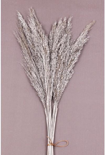 Troya Kuru Çiçek Pampas 10 Adet 100 cm Boy - Gümüş