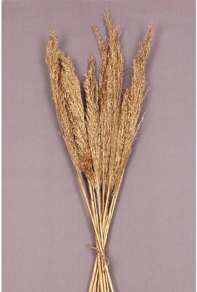 Troya Kuru Çiçek Pampas 10 Adet 100 cm Boy - Altın
