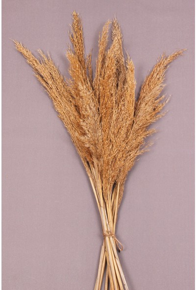 Troya Kuru Çiçek Pampas 10 Adet 100 cm Boy - Naturel