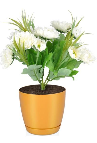 Favilla Floris Saksı Tabaklı 16 cm 2,2 lt Hardal