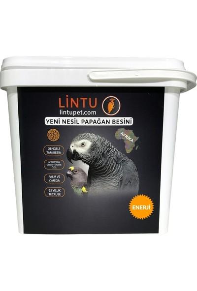 Lintu Afrika Yüksek Enerji Papağan Besini 5 kg