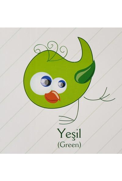 Kids Babies Renkleri Öğreniyorum Türkçe - İngilizce