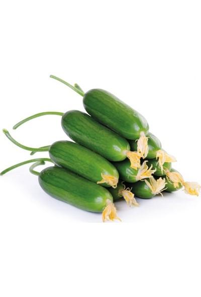 Mutbirlik Çıtır Badem Salatalık Fidesi-5 Adet