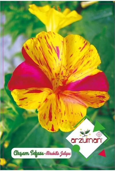 Mutbirlik Kokulu Karışık Akşam Sefası Çiçeği Tohumu-25 Adet