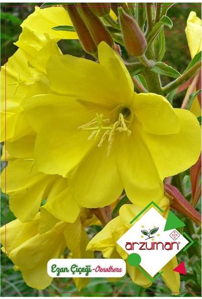 Mutbirlik Akşam Ezanı İle Çiçek Açan Ezan Çiçeği-100 Adet