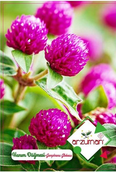 Mutbirlik Hanım Düğmesi Medine Çiçeği Tohumu-20 Adet