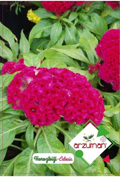 Mutbirlik Koyu Pembe Horoz İbiği Çiçeği Tohumu-100 Adet