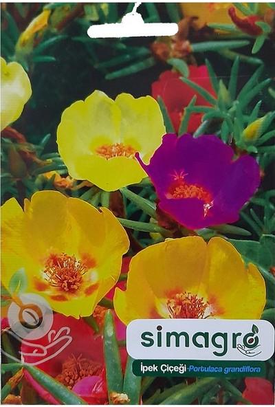 Mutbirlik Karışık Kedi Tırnağı İpek Çiçeği Tohumu-100 Adet