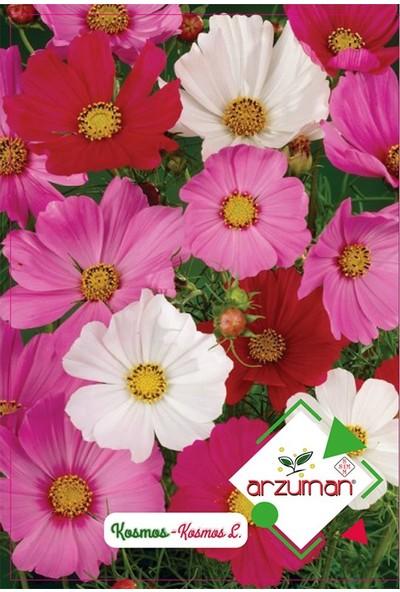 Mutbirlik Hızlı Büyüyen Kosmos Çiçeği Tohumu-30 Adet
