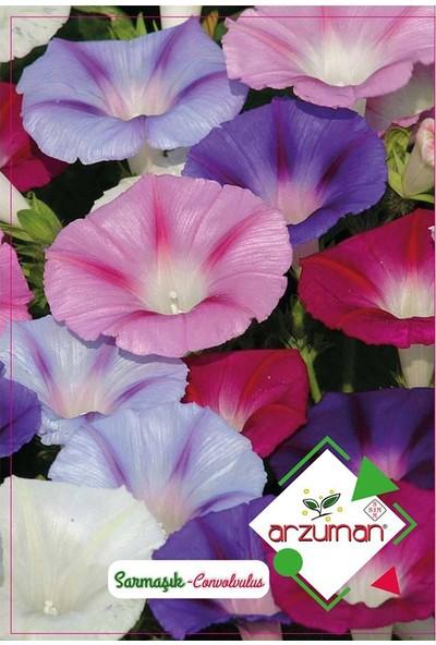 Mutbirlik Sabah Çiçek Açan Sarmaşık Çiçeği Tohumu-50 Adet