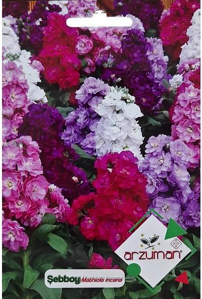 Mutbirlik Güzel Kokulu Şebboy Çiçeği Tohumu-100 Adet