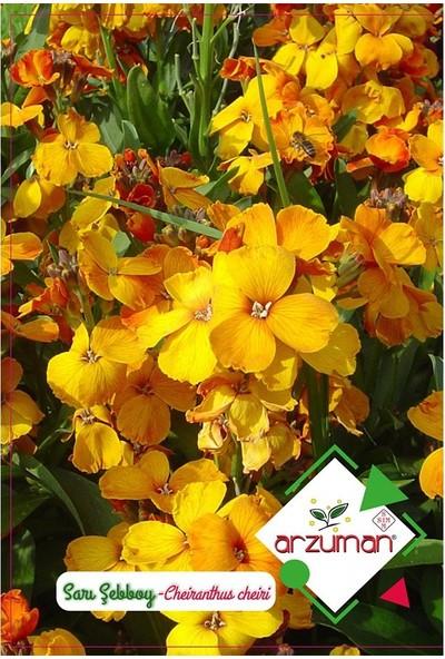 Mutbirlik Dona Dayanıklı Sarı Şebboy Çiçeği Tohumu-100 Adet
