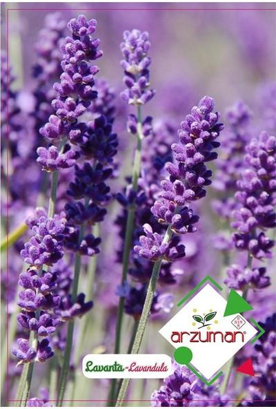 Mutbirlik Lavanta Kokulu Lavandula Çiçeği Tohumu-100 Adet