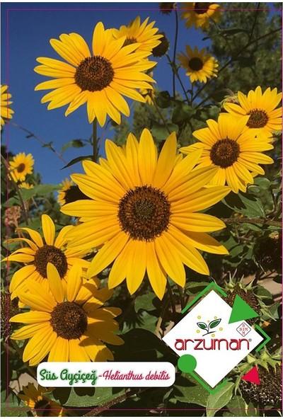 Mutbirlik Minyatür Süs Ayçiçeği Çiçeği Tohumu-50 Adet