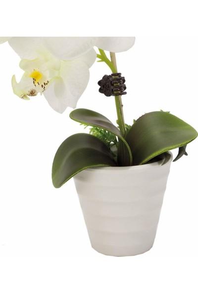 Noble Life Dekoratif Saksıda Ekru Orkide Çiçek 22 cm