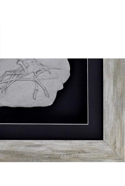 Bubigo Rölyef Kabartmalı Dinazor Fosili Tablo