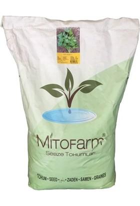 Agrobazaar Maydanoz Tohumu 10 Kg Aynı Gün