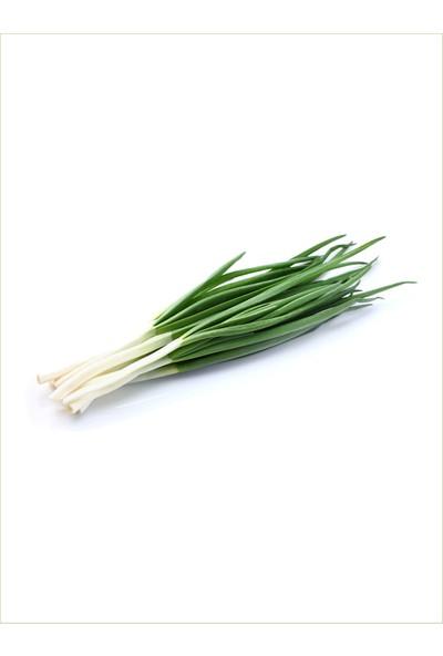 Vitaminye Yeşil Soğan - 1 Deme