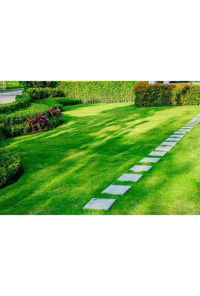 Ulusoy Tohumculuk Shadow Grass Çim Tohumu Karışımı 1 kg