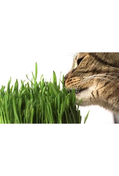 Happy Pet Kedi Çimi Seti 2'li Paket 100 gr 9'lu Karışım Çim