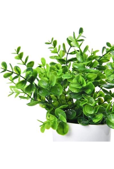 Nettenevime Yapay Çiçek Beyaz Saksıda Yeşil Şimşir Dekoratif Masa Çiçeği