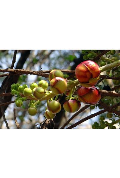 Gübretaş 20 20 20 İz Elementli ( çinko demir bakır mangan ) Azot Fosfor Potasyumca Zengin Meyve Sebze Ağaçları Tomurcuk ve Çiçek Oluşumu Kök Güçlendirici Toz NPK Gübresi Harmanlanmış 5 Kg