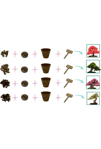 Funny Plants Bonsai Başlangıç Seti