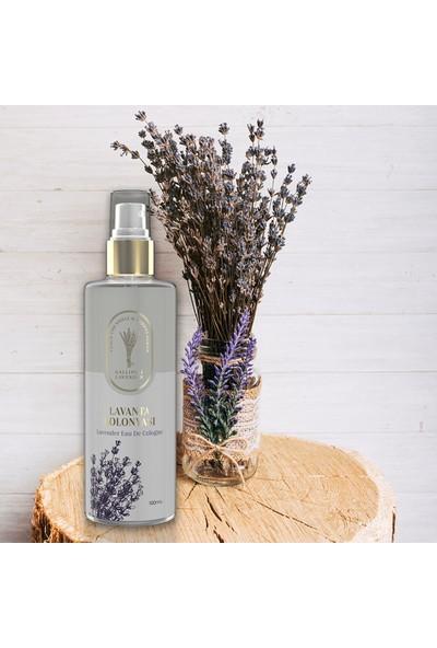 Gallipoli Lavender Lavanta Yağlı Kolonya 80° Sprey 100 ml
