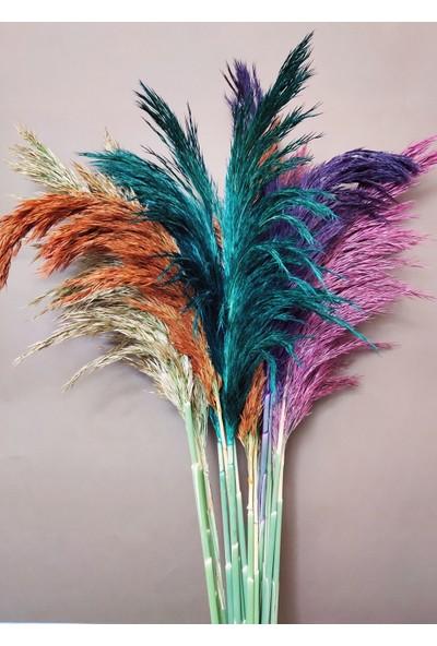 Eçiçek Şoklanmış Pampas Otu 100 cm Karışık Renk
