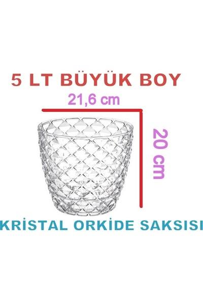 Serinova Büyük Boy 5 lt Tabaklı Kristal Şeffaf Orkide Saksısı KAP03