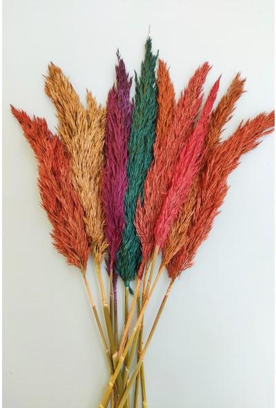 Eçiçek Şoklanmış 10'lu Pampas Otu Karışık Renk 100 cm