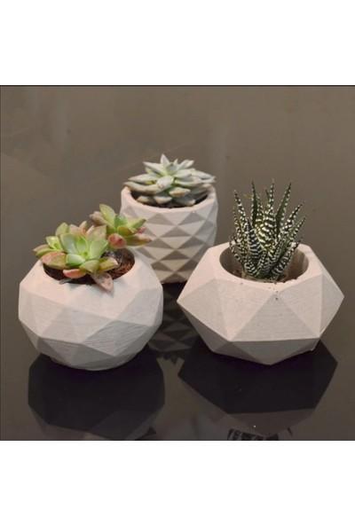 5 Home Deepo Tasarım Skulent Saksı Beton 3'lü Set Çiçekli