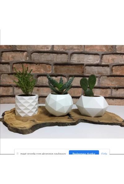 5 Home Deepo Tasarım Skulent Saksı Beyaz 3'lü Set Çiçekli