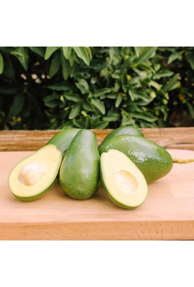 Güney Bahçem Avokado 10 Adet