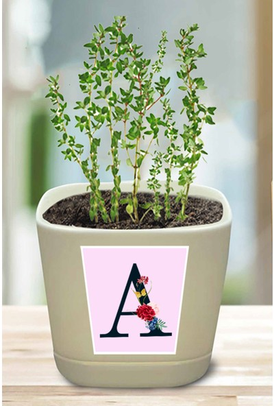 Hediyedukkani A Harfi Çiçek Tasarım Mini Kekik Dikim Kiti