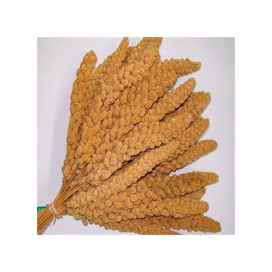 Özlem Sarı Dal Darı 500 gr
