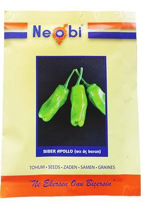 Neobi Biber Tohumu Apollo Acı Üç Burun 10 gr