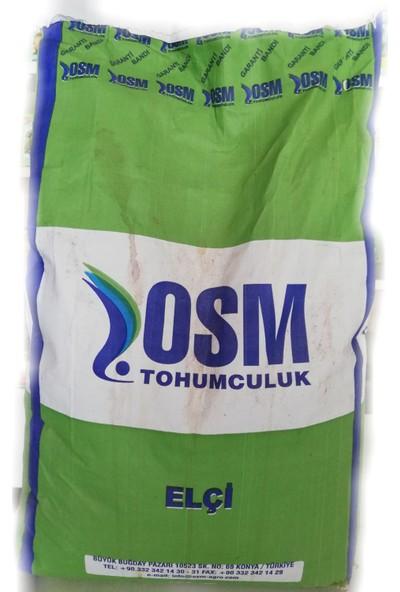 Osm Elçi Yonca Tohumu 10 kg
