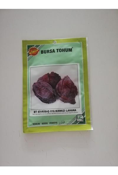 Bursa Tohum - Bt Kara Lahana Tohumu 10 gr