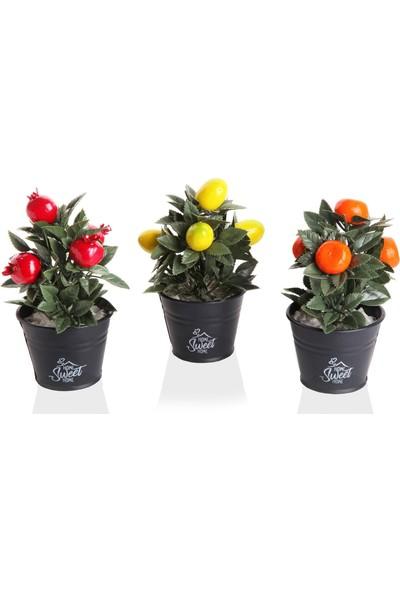Izca Home Mini Meyve Ağacı 3'lü Set