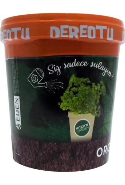 Kitch'n Garden Organik Dereotu Tohumu Sula Büyüt Set