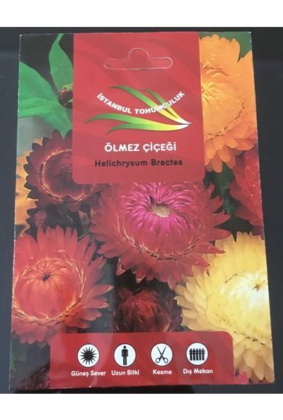 İstanbul Tohumculuk Çiçek Tohumu Ölmez Çiçeği
