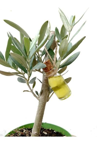 Niva Olea Europaea Çiçeği