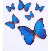 Akın Ucuzluk Kelebek Figürlü 6 Parça Mavi Ahşap Duvar Yapıştırma Süsü