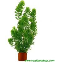 Akvaryum Bitkileri Çam Akvaryum Bitkisi 1 Saksı 5 Kök