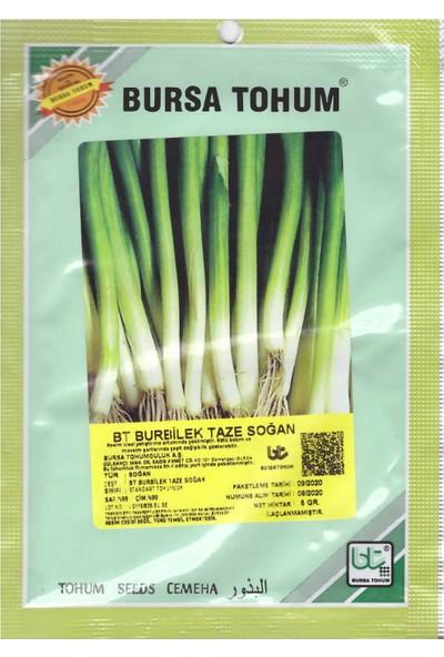 Bursa Tohum Burbilet Taze Yeşil Soğan Tohumu 5 gr