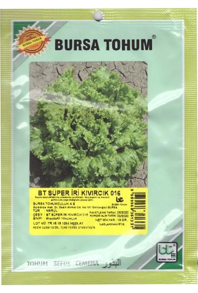 Bursa Tohum Süper Iri Kıvırcık Tohumu 10 gr