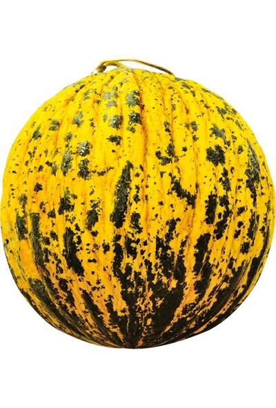Portakal Çiçeği Dilimli Altınbaş Kavunu Tohumu (%100 Yerli) 10 Adet